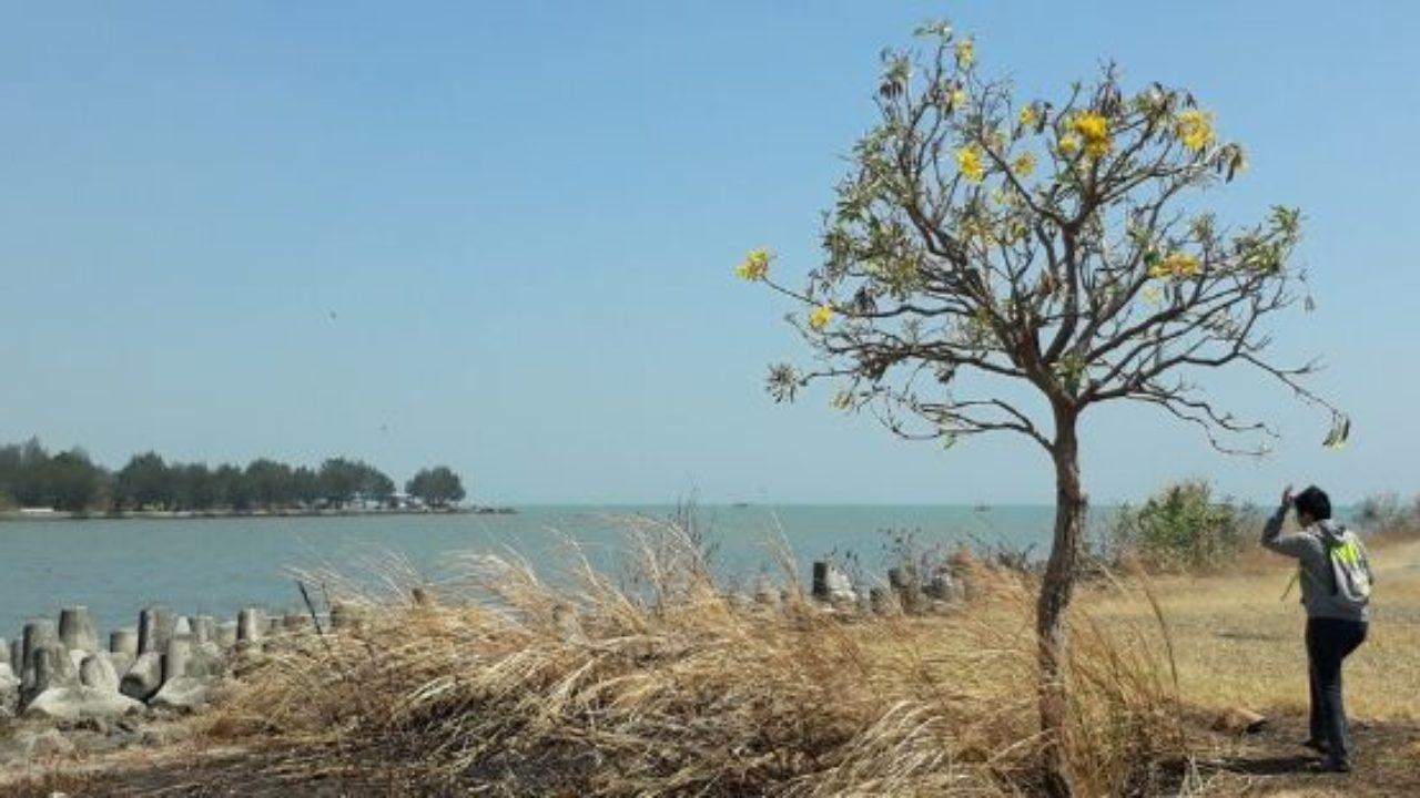 Pantai Baruna Berburu Ketenangan di Utara Semarang