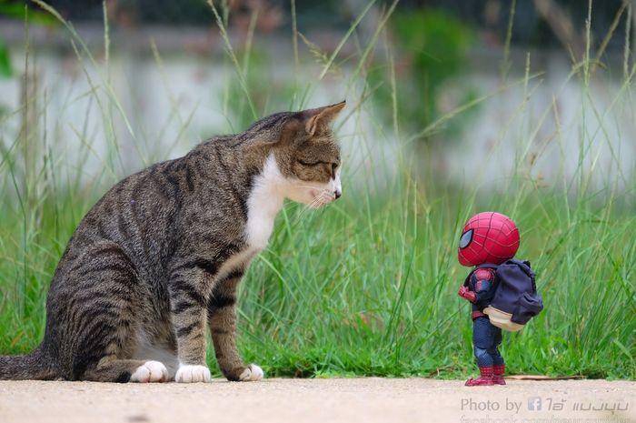Pamitan sama Kucing Kesayangan - Kucing nggak perlu ke penitipan hewan